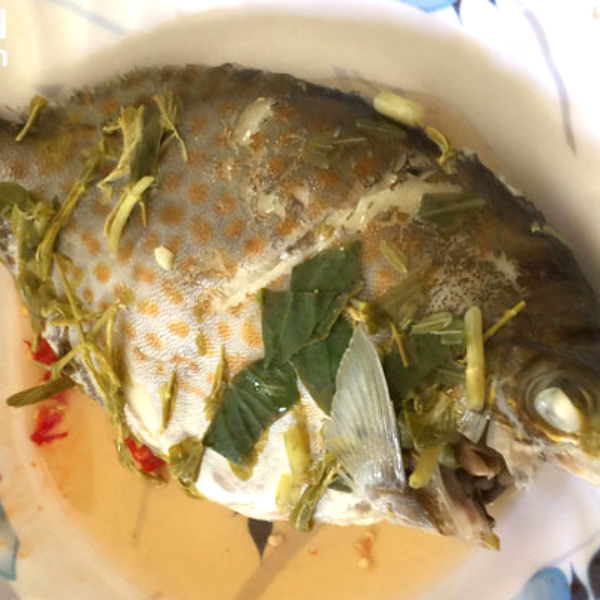 Cá Dìa Bông/ 1kg