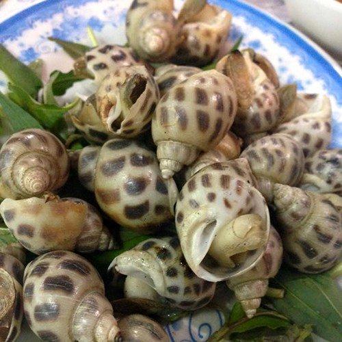 Ốc hương sống (80-90 con)-(kg)